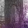 VAGINA TREE