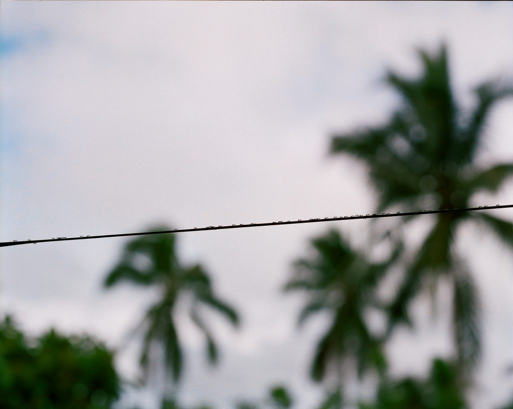 An out of focus image of several palm trees on a cloudy sky. In focus, a power line cuts across the image horizontally.
