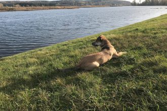 This is a photo of Hester the dog. She is lying on a grassy bank nearby a river or a lake. Her shadow is cast over the grass and she's looking at the water intently.