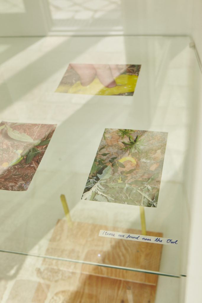 Images of yellow slime and gooey objects in the forest behind a glass display case
