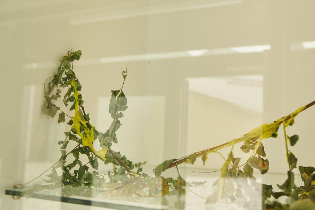 A branch covered in yellow goo behin da glass display case